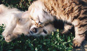 setting-up-pet-trusts